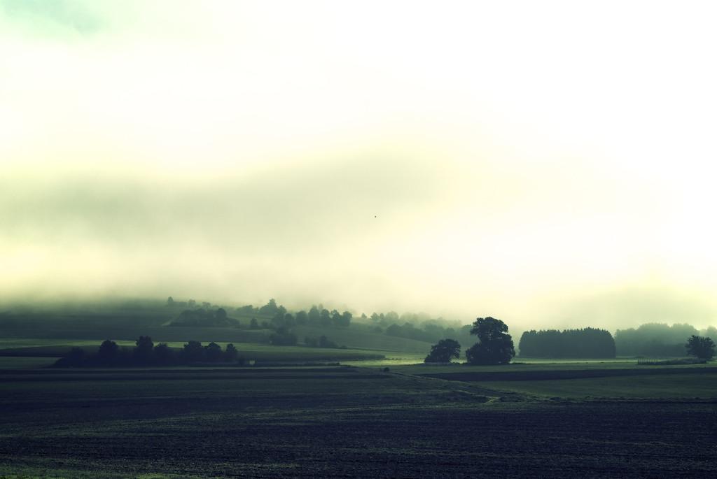 Frühnebel bei Northeim